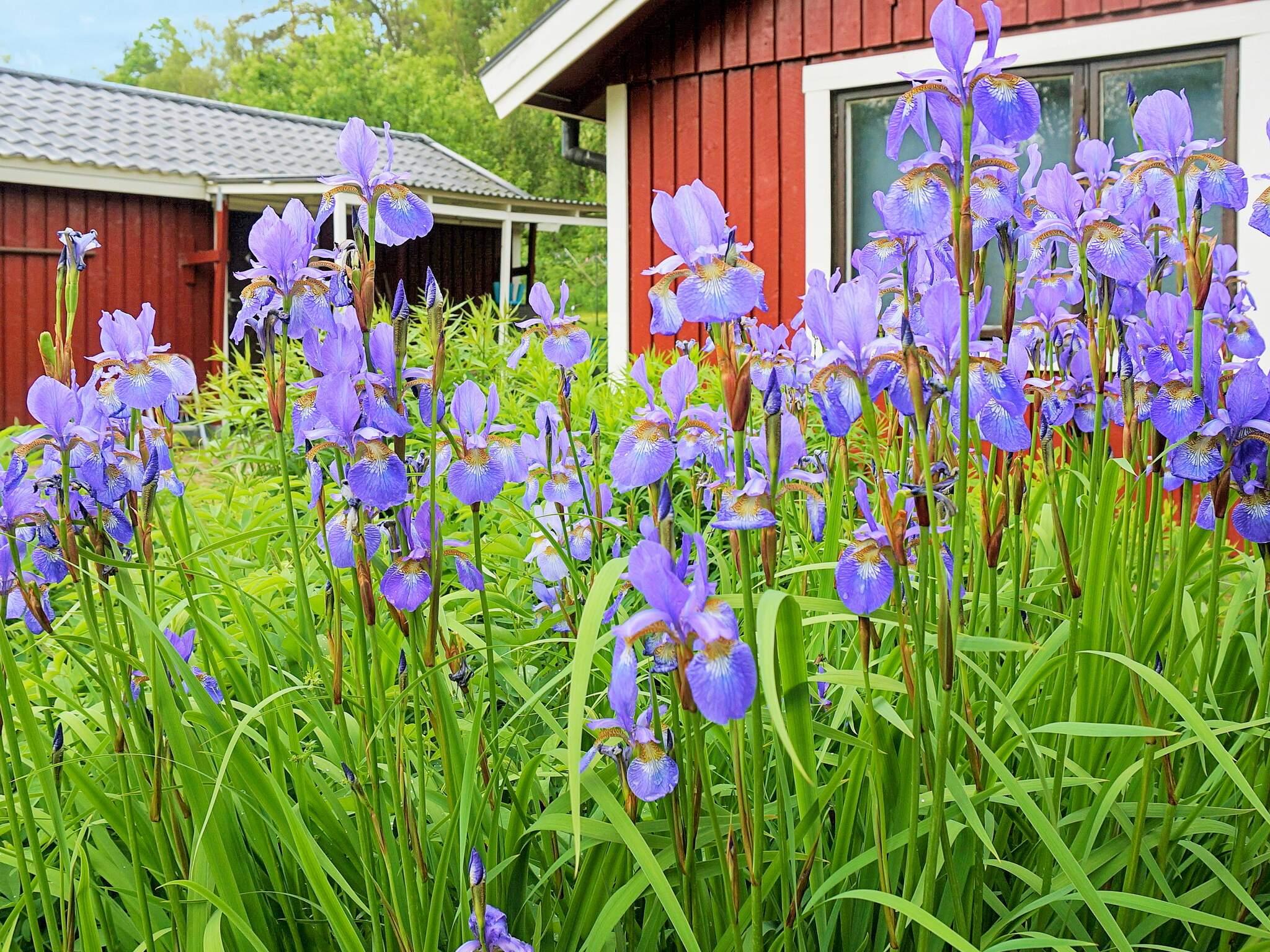 Ferienhaus Ljungby (2636845), Ljungby, Kronobergs län, Südschweden, Schweden, Bild 17
