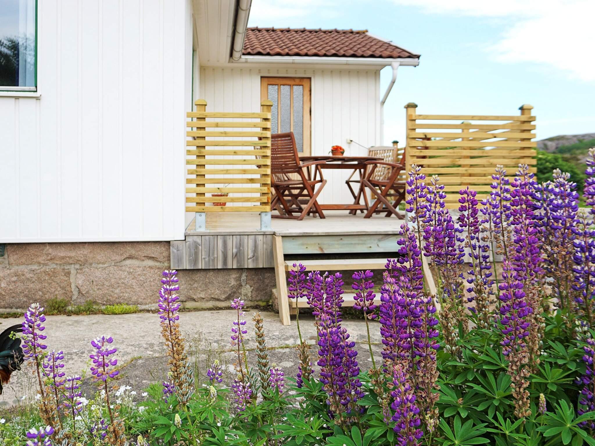 Ferienhaus Väjern (2636847), Kungshamn, Västra Götaland län, Westschweden, Schweden, Bild 11