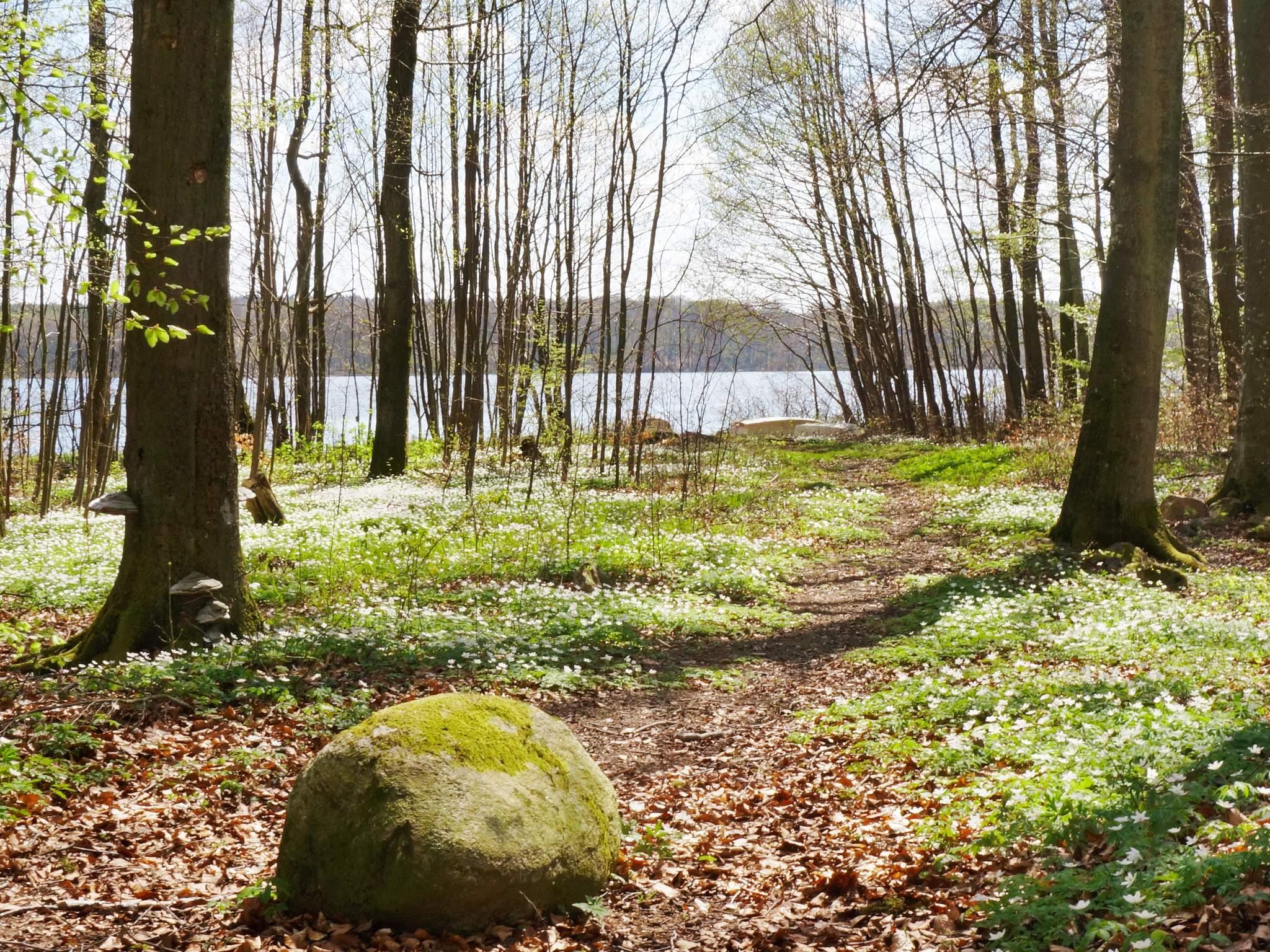 Ferienhaus Sösdala (83824), Sösdala, Skane län, Südschweden, Schweden, Bild 33
