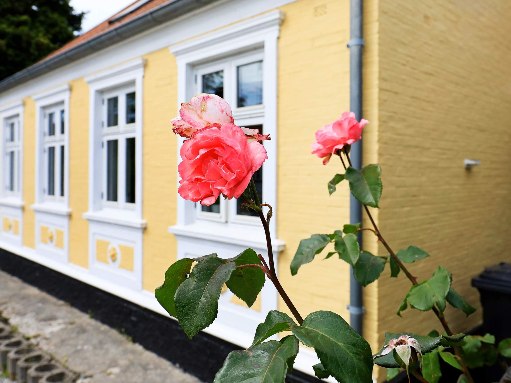 Maison de vacances Ærø/Marstal (2438416), Marstal, , Ærø, Danemark, image 19